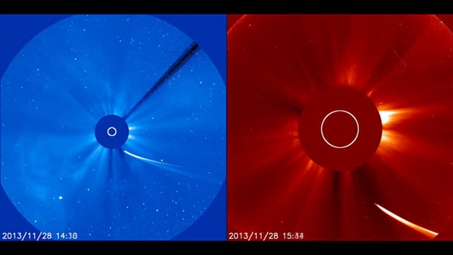 Comet ISON Dives Toward the Sun (SOHO LASCO images)